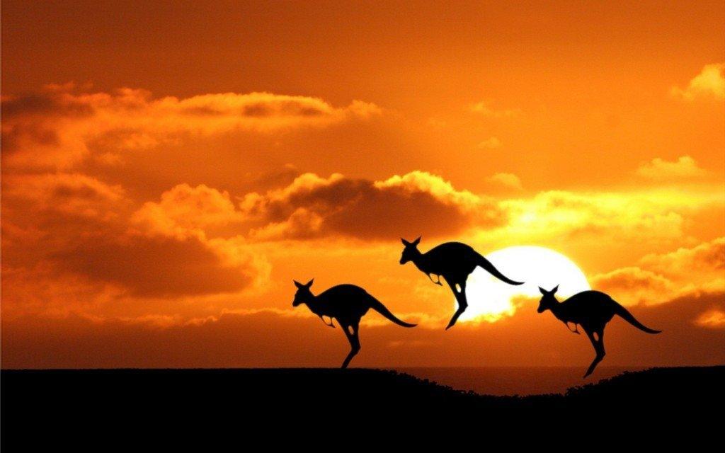 Kangaroo-at-Sunset-1024x640
