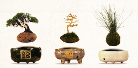 content_small_bonsai