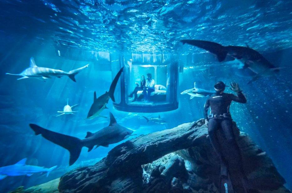 L'acquario degli squali Airbnb