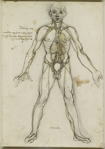 Sono gratis (e ad alta risoluzione) i disegni sull'anatomia di Leonardo Da Vinci