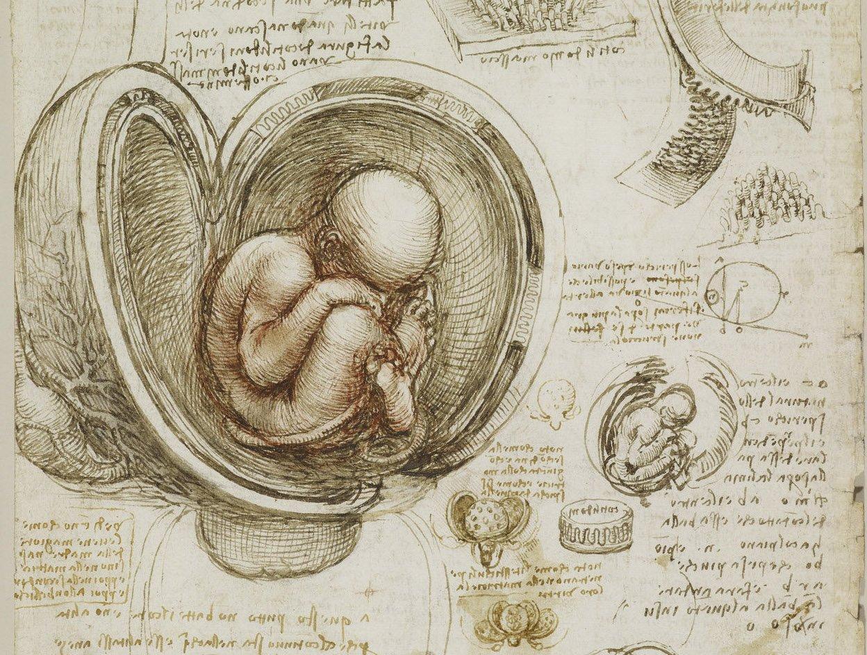 Da Vinci Fetus - Что посмотреть в Риме. Неделя 45
