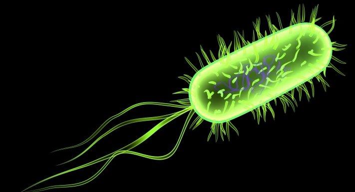 e-coli-streptococci