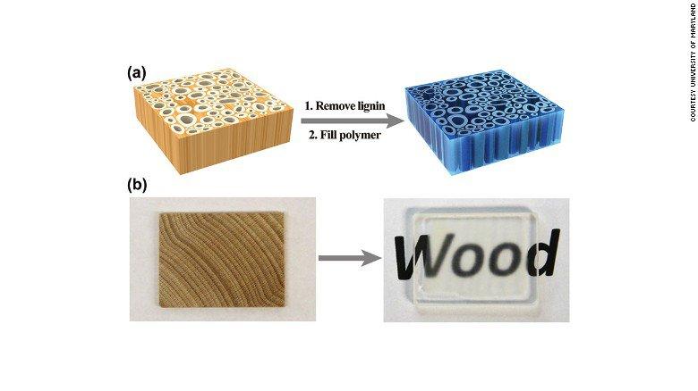 Clear wood, il legno trasparente che rivoluzionerà l'architettura