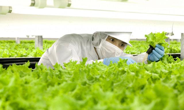 In Giappone è già l'era dei contadini robot