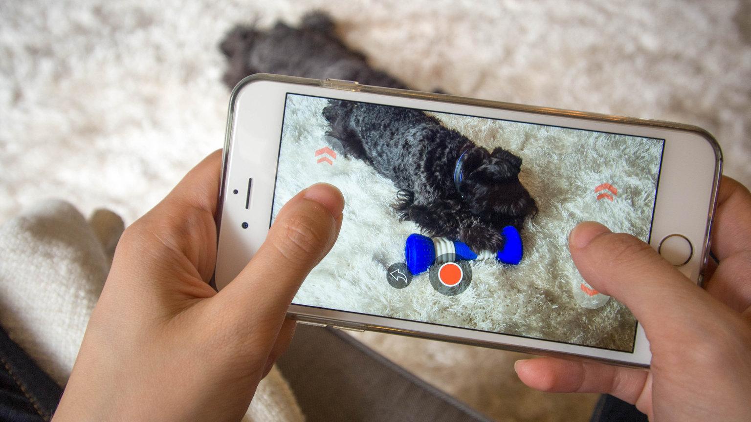 GoBone, l'osso intelligente che tiene occupato il tuo cane quando è solo