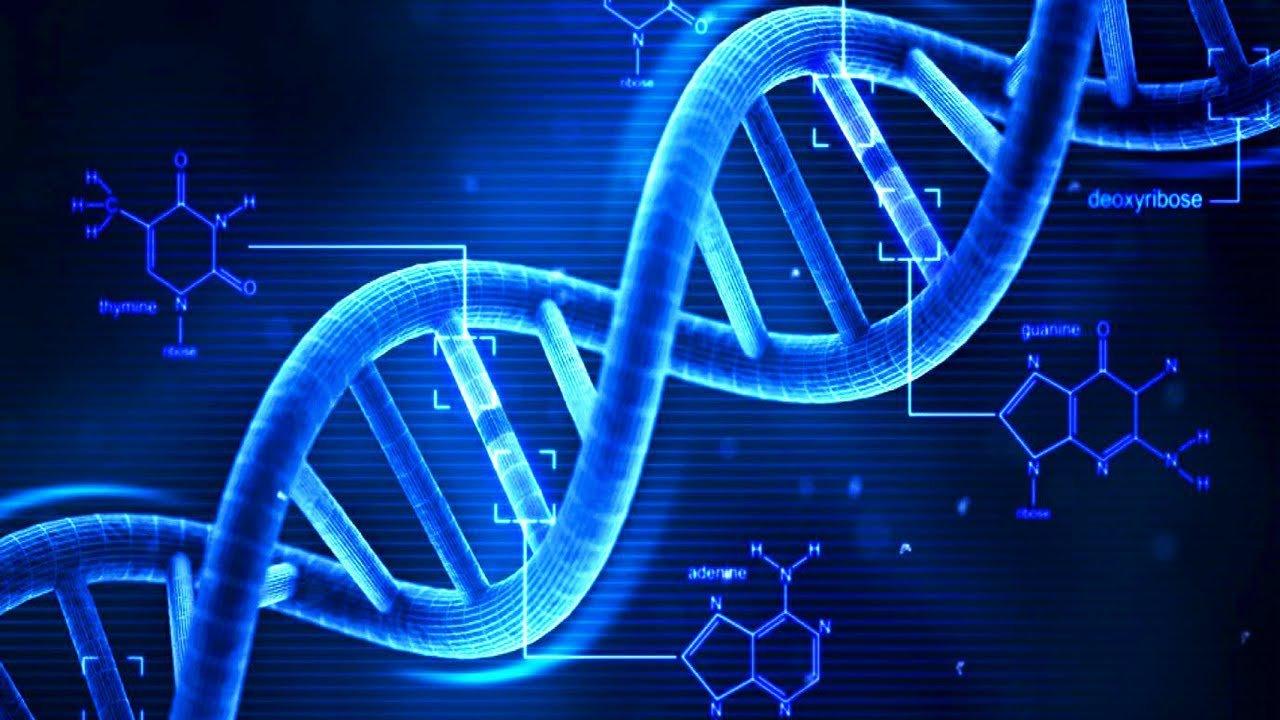 Creare da zero un intero genoma umano: il progetto (rivoluzionario) di Harvard