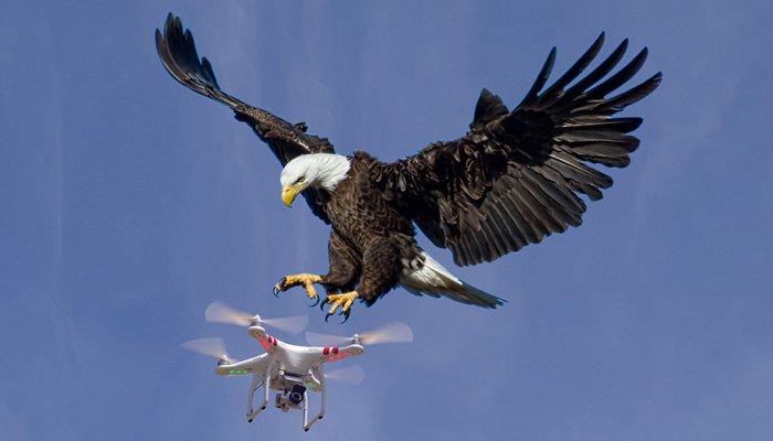 eagles_drone