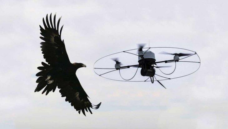 aquila-contro-drone