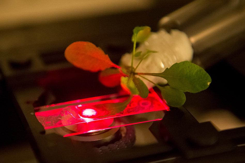 """Così potremo """"parlare"""" con le piante. La nanobionica vegetale, spiegata"""