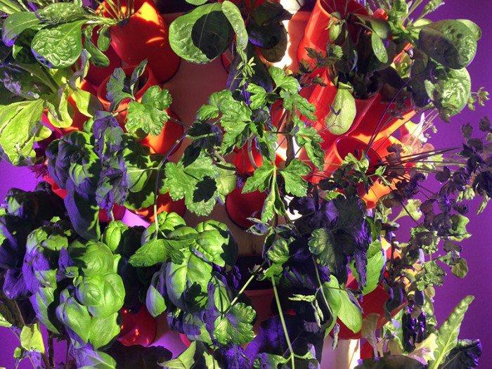 foto 09-04-15 07 43 58-crop-u11632