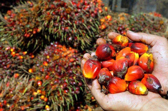 oliodi palma