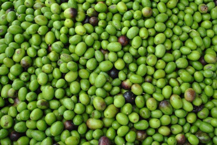 Olive_toscane