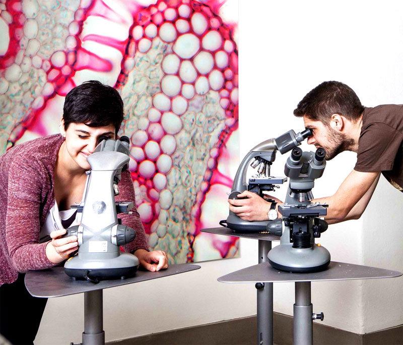 cibo_microscopio_2