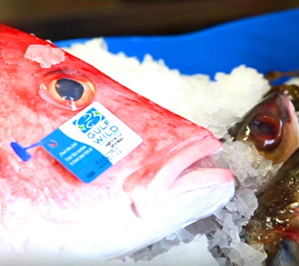 pesce_1