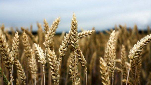 Quali sono i rischi per l'agricoltura ora che Bayer ha comprato Monsanto. 5 cose da sapere