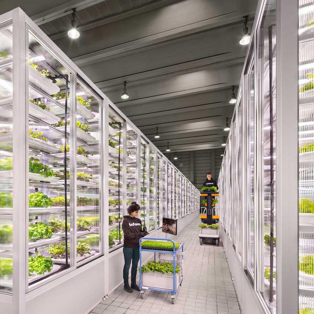 Infarm, la startup tedesca delle vertical farm chiude un round da 25 milioni di dollari