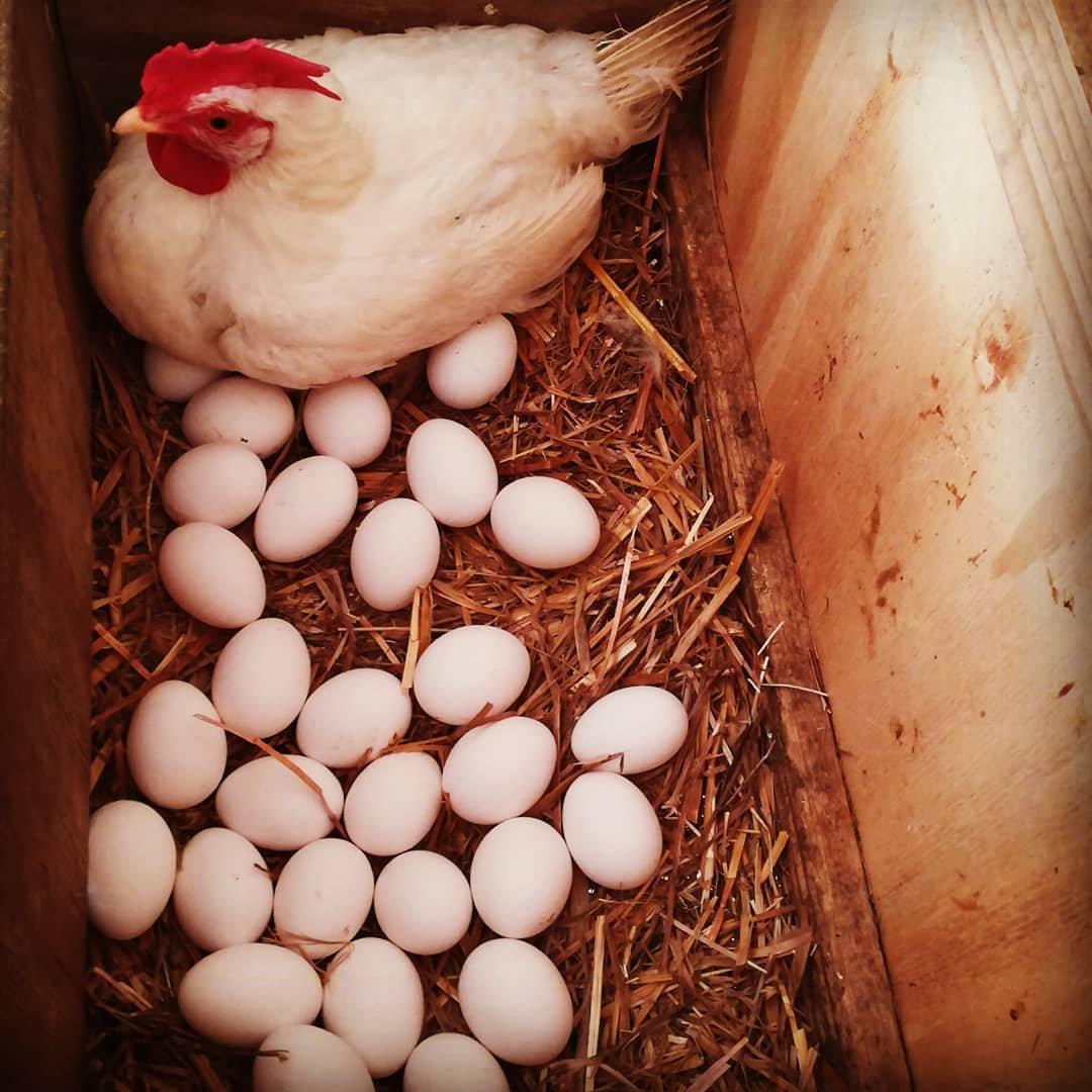 Uovo Perfetto