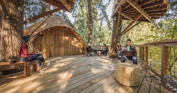 Microsoft, l'ufficio è sull'albero: la natura aumenta la creatività