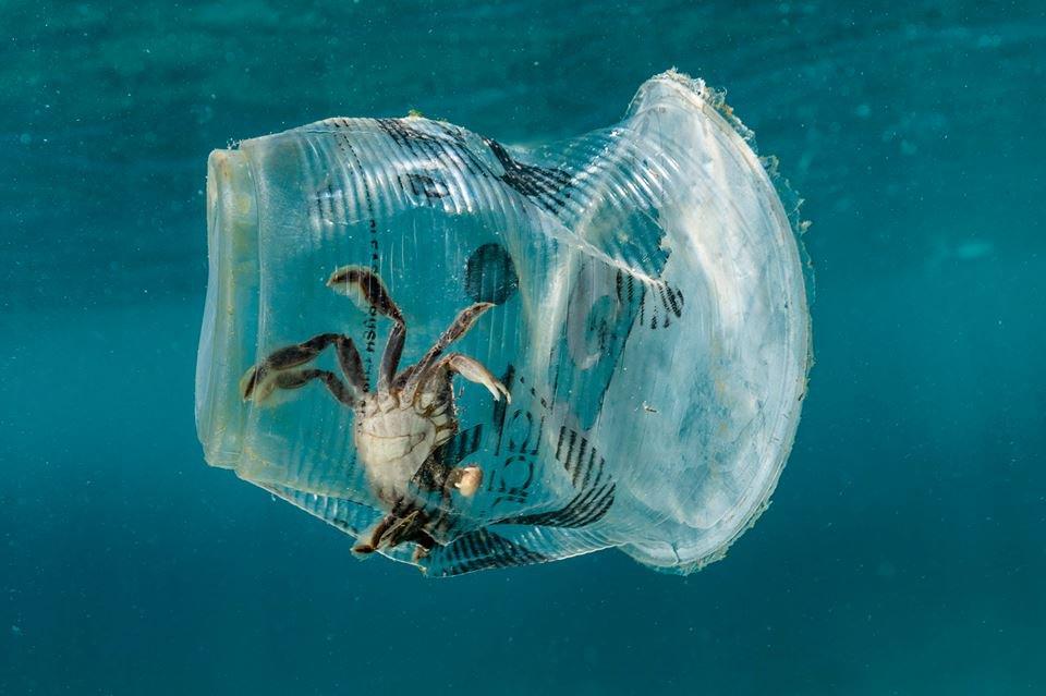 Modificare le molecole della plastica per renderla green ora è possibile