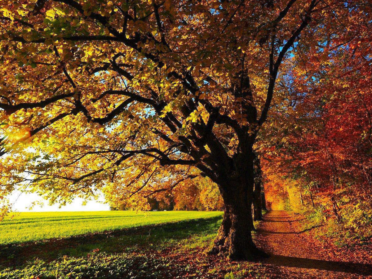 Week end green in autunno? Quattro destinazioni in Italia