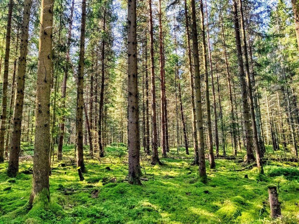Quanti alberi servirebbero per compensare l'inquinamento di una famiglia?