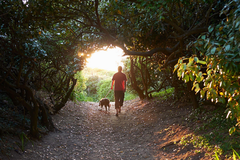 Man Walking Dog : Cosa fanno nel weekend le persone di successo