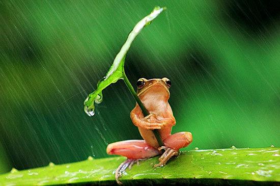 rana-pioggia
