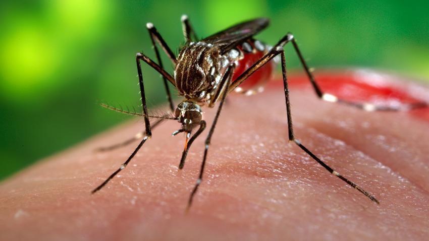 virus-zika