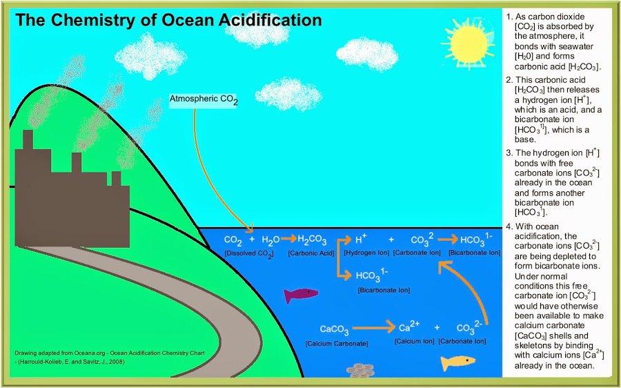 Ocean Acidification Chemistry