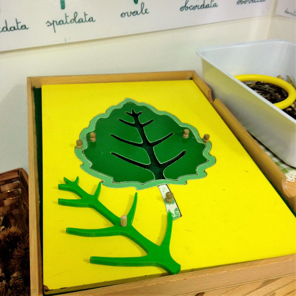 Montessori 3D
